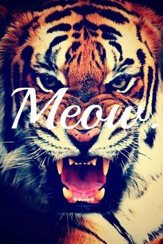 METTER TIGERS =)