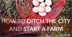 How to Ditch the City and Start a Farm - The Paleo Mama...Wow, this story lays out exactly what I want to do!!  Except for the part about living in a city (but at least my husband works in one)
