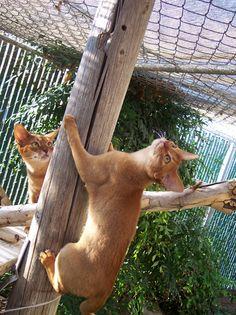 outdoor cat area