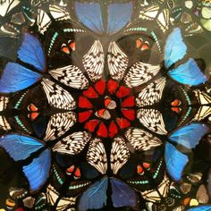 Home / Articles for Art Students / Writing the Art Personal Study: examples, help and guidance. Writing the Art Personal. Damien Hirst Butterfly, Bio Design, Insect Art, Bugs And Insects, Arts Ed, Gcse Art, Natural Forms, Butterfly Wings, Mandala Art
