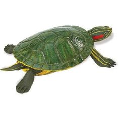 Red-Eared Slider Turtle (Incredible Creatures)