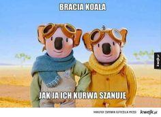Szacun dla braci koala Memes, Haha, Disney Characters, Fictional Characters, Teddy Bear, Humor, Anime, Cartoons, Plants