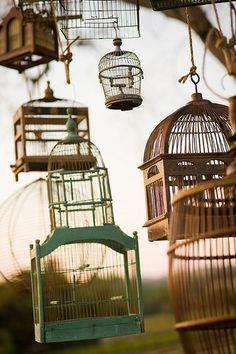 I love this idea for a backyard tree, I will put bird seed in every cage so birdys can come and go! Outdoor Spaces, Outdoor Living, Antique Bird Cages, Vintage Birds, Beautiful Birds, Beautiful Things, Bird Houses, Gazebo, Pergola
