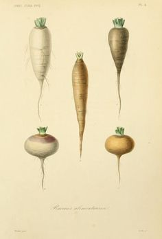 Horticulture: Jardin potager et jardin fruitier by Hérincq, F. (François), 1820-1891 and Gérard, Frédéric. / Not In Copyright (aka public domain) - http://www.biodiversitylibrary.org/item/43933#page/27/mode/1up