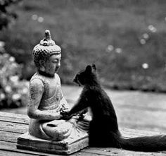 """Buddha, I want to have your peace, your wisdom, your serenity, your divine nature, ...your acorn hat"" Love, Squirrel"