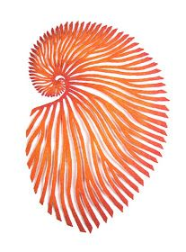 The Artwork of Meredith Woolnough: My new favourite marine critter - the Argonaut.