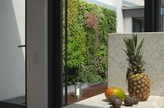 Diese 10 qm große Grüne Wand von verticalgreendesign mit winterharten Pflanzen steht auf einer Berliner Dachterrasse