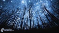 Bäum Silhouetten, Wald, Universum