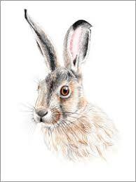 Image result for rabbit portrait