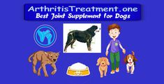 Athlete Nutrition, Fitness Nutrition, Health And Nutrition, Holistic Dog Food, Holistic Wellness, Holistic Remedies, Herbal Remedies, Joint Supplements For Dogs, Prevent Arthritis