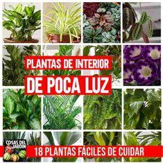Succulents Garden, Garden Pots, Planting Flowers, House Plants Decor, Plant Decor, Herbs Indoors, Easy Garden, Gardening For Beginners, Raised Garden Beds