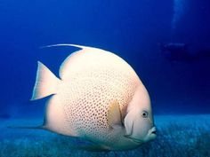 fish-wallpaper-254