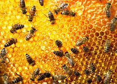 Honey You Should Never Buy – It May Be Tainted with Lead and Antibiotics | World Truth.TV
