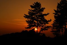 Sunset behind trees by Frank Andree on 500px