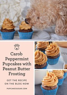 Sugar shares her personal story about starting over and her recipe for Carob Peppermint Pupcakes with Peanut Butter Frosting for the dog you love to spoil. Diy Dog Treats, Homemade Dog Treats, Dog Treat Recipes, Dog Food Recipes, Party Treats, Peanut Butter Dog Treats, Peanut Butter Frosting, Bern, Pupcake Recipe