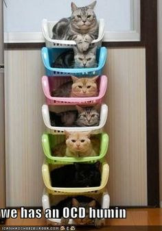 High rise cat beds