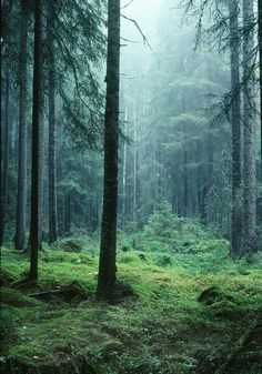 Forest in Sweden..spooky