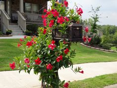 Better Box Mailbox Bronze with Beautiful Flowering Decor