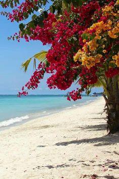 Playa y bugambilias <3