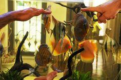 Piccoli allevatori nascono – a casa di Emanuele Arcangeli on http://www.discusclub.net