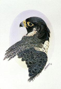 dibujos artisticos halcon - Buscar con Google