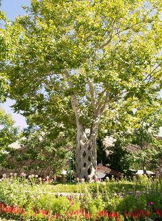 Beautiful gilroy ca my gilroy ca pinterest for Gilroy garden trees