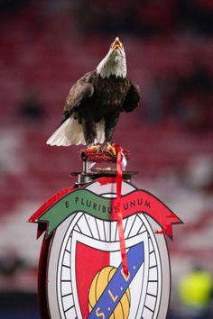 Benfica Wallpaper, Champions League, Bald Eagle, Football, Japan, Bird, Tv, Animals, Best Pictures