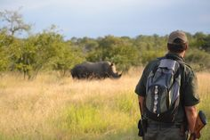 Walking safaris are done in the morning and take roughly 3 hours. The walks are not strenuous and take place on flat ground. Guests will learn how to track wildlife, read the signs of the bush and learn about the various plant species Virtual Families 2, Kruger National Park, Plant Species, African Animals, Nature Reserve, Bradley Mountain, South Africa, Safari, Wildlife
