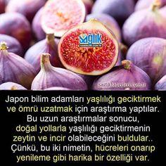 Zeytin ve incirdeki mucize! #zeytin #incir