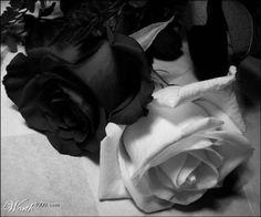 Rosen black & white