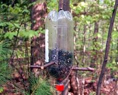 Construir un comedero para pájaros con una botella