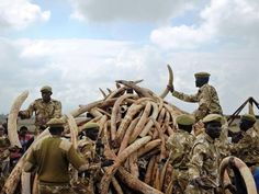 kenya-ivory.jpg