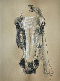 Horse Head, Animal, Contemporary Original Fine Art, Pastel and Black Chalk Drawing of a Horse