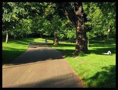 Autumn in Green Park(green park, london, england)