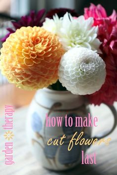 How to Make Cut Flowers Last - When your garden is in full bloom, I am sure that you have a plethora of flowers to cut and enjoy indoors. Here are some tips to…