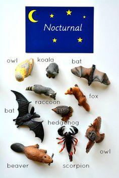 Montessori Nocturnal Diurnal Activity