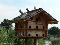 """Pigeon house.. """"soooo cuuutteee"""""""