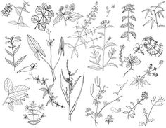 How to sketch plants - Google Search