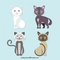 Black Cat Vectors, Photos and PSD files | Free Download