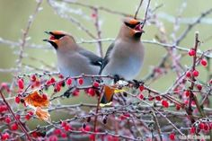 Beautiful Birds In Winter 35 Photo