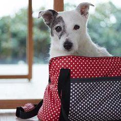 Hundetragetasche GU Lieblingsstücke für den Hund