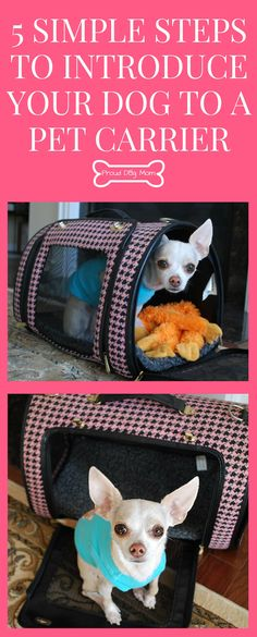 5 Simple Steps To Introduce Your Dog to a Pet Carrier   Dog Travel Tips  