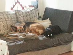 Mit hundeliv med Vaks.: Mad med mere / Food... Read the blog.