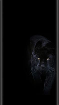 29 Ideas For Wallpaper Sperrbildschirm Schwarz S8 Wallpaper, Tier Wallpaper, Black Phone Wallpaper, Animal Wallpaper, Cellphone Wallpaper, Wallpapers Android, Panther Pictures, Landscape Drawings, Foto Art