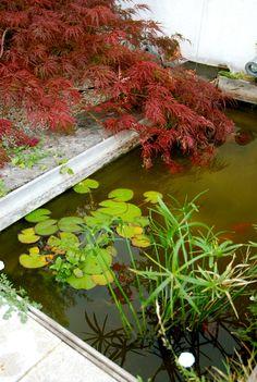 Estanque con peces de colores