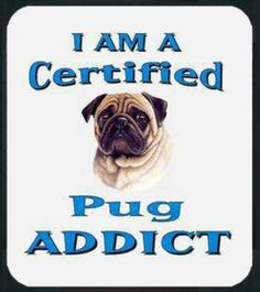 us why YOU are a Pug Addict too? bark at us @ Pug Love, I Love Dogs, Pug Quotes, Amor Pug, Pug Mug, Pugs And Kisses, Pug Pictures, Pug Pics, Cute Pugs