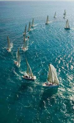 Sailboats resemble a school of fisk