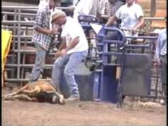 "RODEO CRUELTY EXPOSED!!! Forget the myth of rodeos as all-American sport. Modern rodeos are cruel and deadly for animals. Traditional ranch work has been perverted into a spectacle of animal abuse disguised as ""western tradition."" Click on link below to read more...."