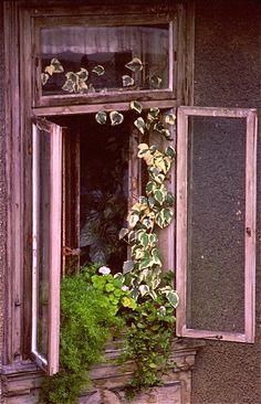 Window garden (S. Caputo)