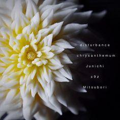 一日一菓 「乱菊」 煉切 製 本日は「乱菊」です。 今の私に出せる最高の作品を。 本日、心の底より心震える感動を 頂きました! 今日の感動を与えてくれた全ての感謝を込めて。ありがとう どうか終わる事のない 覚めない夢を、、、